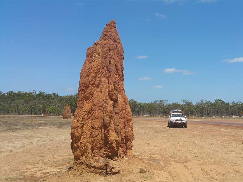 Ant Mound at Bramwell Station in Cape York